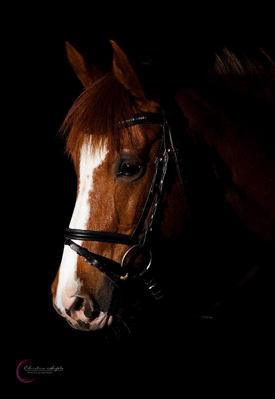 k-Pferd-schw-Hintergrund-2.jpg
